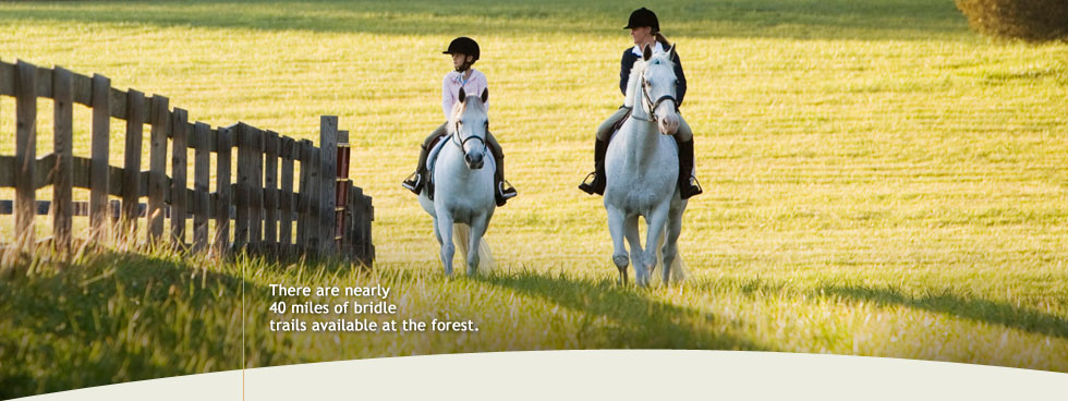 """horseback riding along fence"""