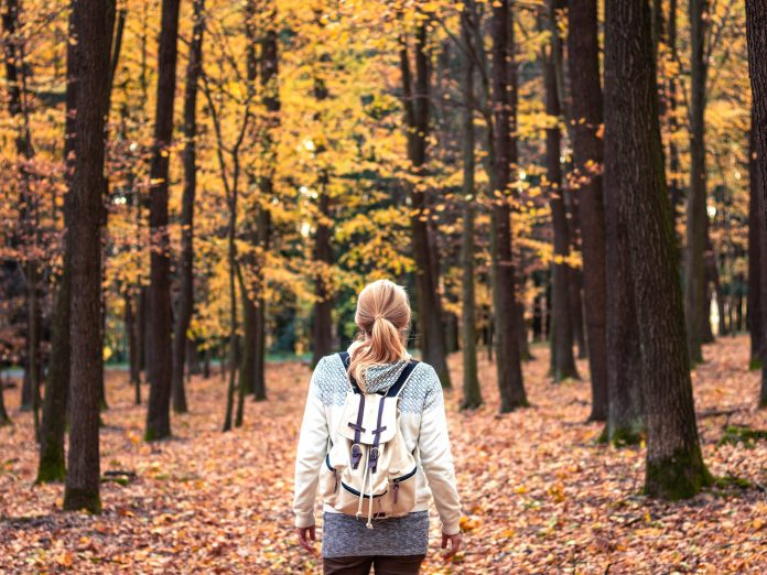Woman with backpack walking in forest at autumn.