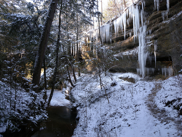 hocking hills forest in the snow